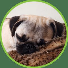 Tiddletime Dog Boarding Service