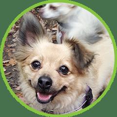 Tiddletime Dog Walking Service