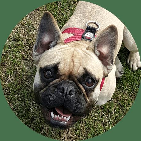 Dog Walker Herne Hill SE24 Dulwich SE22