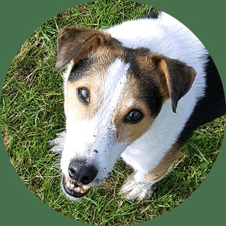 Doggy Daycare Herne Hill SE24 Dulwich SE22 Peckham Rye SE15 Crystal Palace SE19