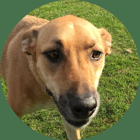 Doggy Daycare Forest Hill SE23 Honor Oak SE23 West Norwood SE27 Tulse Hill SW2