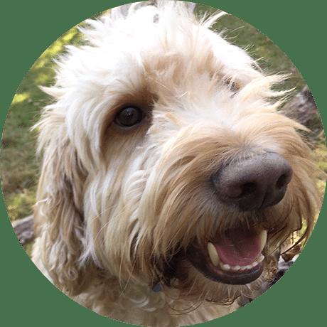 Dog Walker West Norwood SE27 Tulse Hill SW2