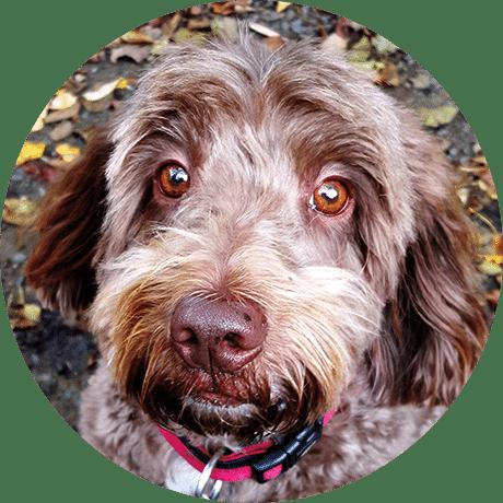 Dog Walker Peckham Rye SE15 Crystal Palace SE19